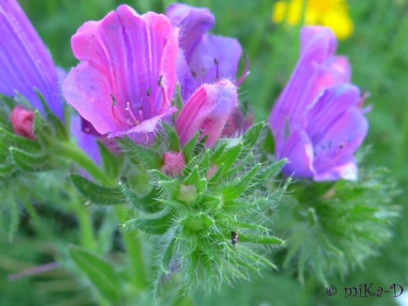 En partage fleurs et nature - Initiatives fleurs et nature ...